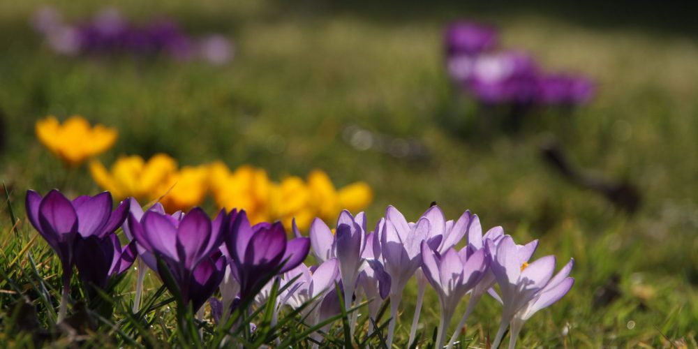 Spartage im Frühling!